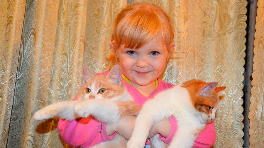 янтарная кислота для домашних животных