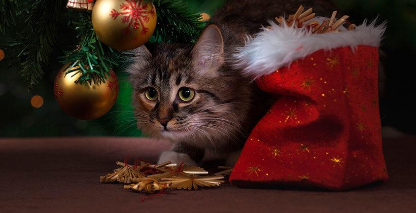Что можно подарить на Новый год и Рождество? Интересные и неожиданные подарки