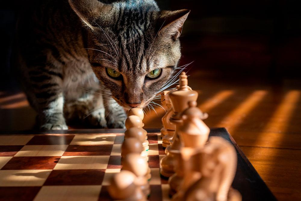шахматы для ясности ума