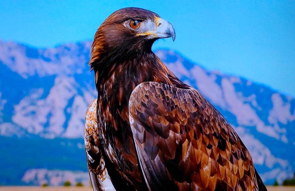 орел, собственное достоинство